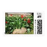 tulipanes por la casa bien vieja sello