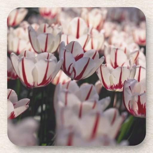 Tulipanes Posavasos De Bebidas