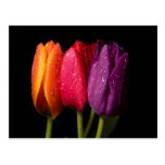 tulipanes postales