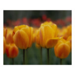 Tulipanes Poster