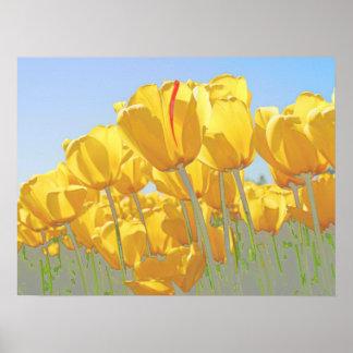tulipanes póster