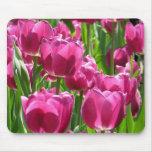 Tulipanes púrpuras alfombrilla de ratón