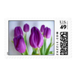 Tulipanes púrpuras bonitos franqueo