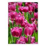 Tulipanes púrpuras felicitación