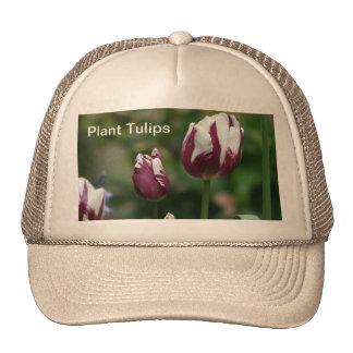 Tulipanes púrpuras gorra