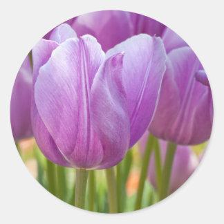 Tulipanes púrpuras que florecen en primavera pegatina redonda
