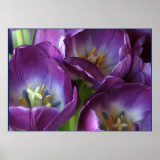 Tulipanes púrpuras vibrantes poster
