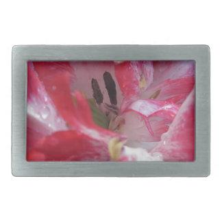 Tulipanes rayados con las gotitas en primavera hebilla cinturón rectangular