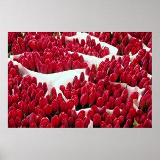 Tulipanes rojos, Amsterdam, flores holandesas Póster