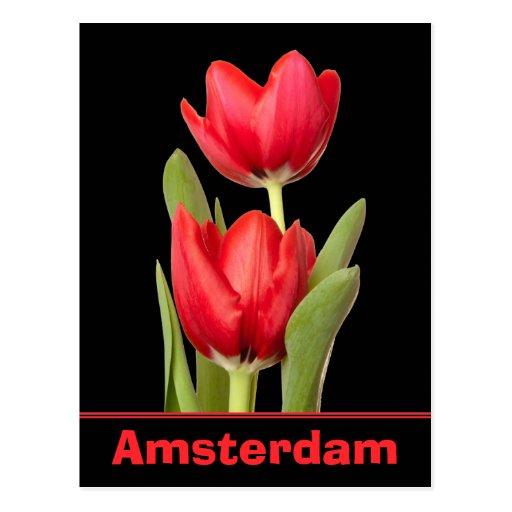 Tulipanes rojos Amsterdam Tarjeta Postal