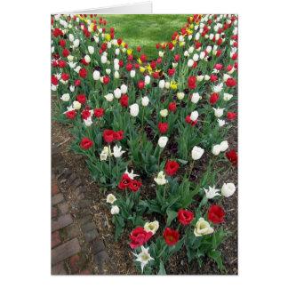 Tulipanes rojos blancos y negros tarjeta