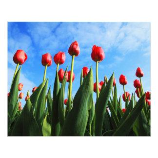 Tulipanes rojos en el Sun Impresiones Fotográficas