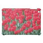 Tulipanes rojos, flores de Ottawa