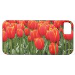 Tulipanes rojos iPhone 5 carcasa