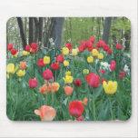 Tulipanes rojos, primavera amarilla, anaranjada, f alfombrillas de ratones