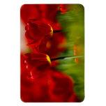 Tulipanes rojos y amarillos imán