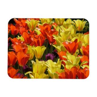 Tulipanes rojos y amarillos imanes flexibles