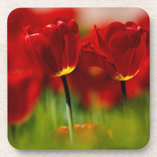 Tulipanes rojos y amarillos posavasos de bebidas