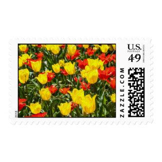Tulipanes rojos y amarillos sellos