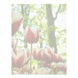 Tulipanes rojos y blancos DSC0869 Plantilla De Membrete