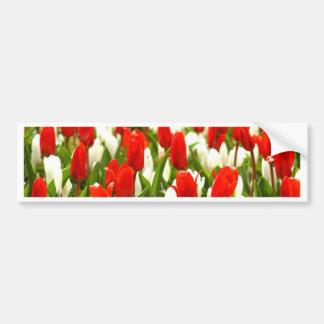Tulipanes rojos y blancos pegatina para auto