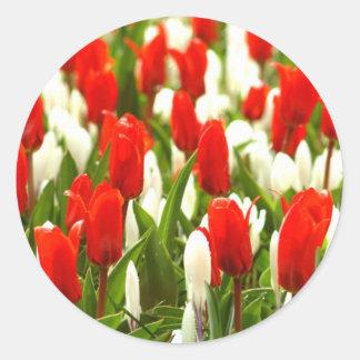 Tulipanes rojos y blancos pegatina redonda