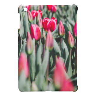 Tulipanes rojos y rosados, campo de flor en
