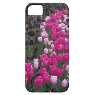tulipanes, rosa, púrpura, campo de tulipanes, funda para iPhone SE/5/5s