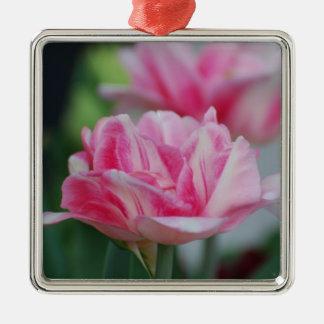 Tulipanes rosados bonitos adorno