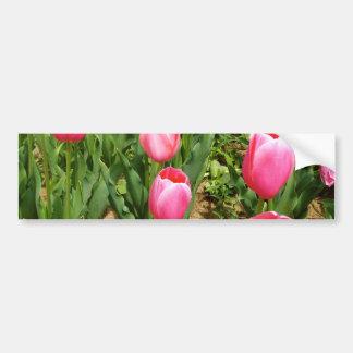 Tulipanes rosados pegatina de parachoque