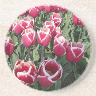 Tulipanes rosados de Holanda Posavasos De Arenisca