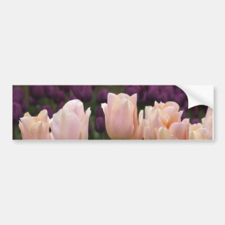 Tulipanes rosados de Jodi Tripp Pegatina Para Auto
