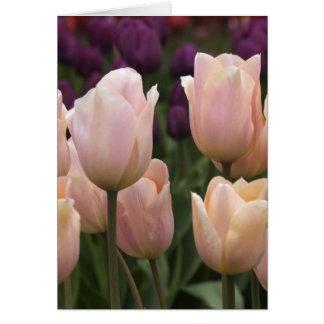 Tulipanes rosados de Jodi Tripp Tarjeta De Felicitación