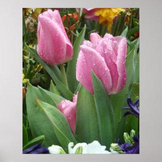 Tulipanes rosados del pétalo Nestled en el poster Póster