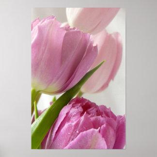 Tulipanes rosados impresiones