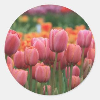 tulipanes rosados pegatina redonda