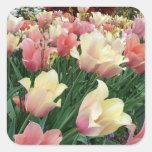 Tulipanes rosados y amarillos colcomanias cuadradases