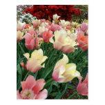 Tulipanes rosados y amarillos tarjeta postal