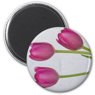 Tulipanes rosados y pared de ladrillo blanca imán redondo 5 cm