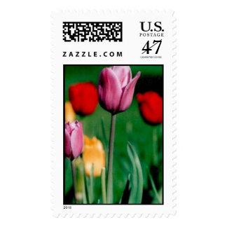 Tulipanes Sello Postal