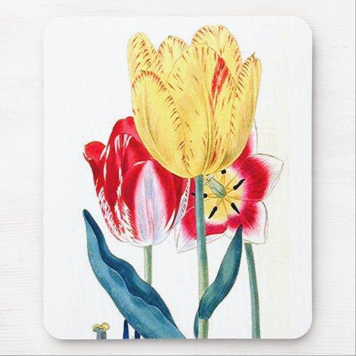 Tulipanes Tapete De Raton