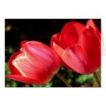 Tulipanes Tarjeta De Felicitación