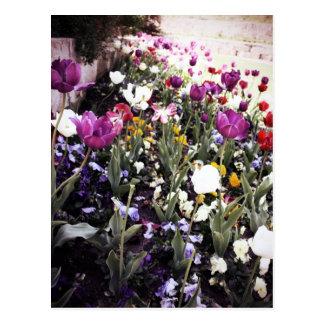 Tulipanes Postal