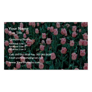 Tulipanes tempranos, flores rosadas tarjetas de visita