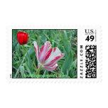 Tulipanes vecinos sello