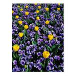 Tulipanes y flores de las violas postales