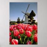 Tulipanes y flores rojos rojos del molino de vient posters