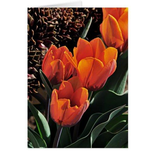 Tulipanes y gallinas felicitación