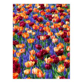 Tulipanes y jacintos de uva postales