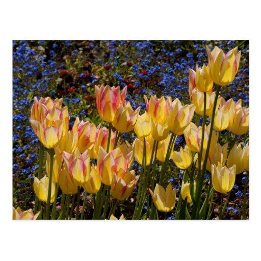 Tulipanes y nomeolvides postal
